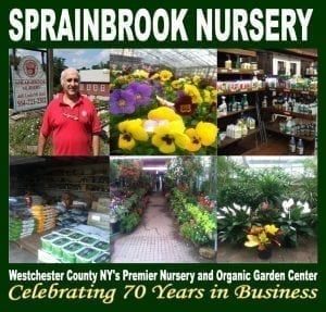 sprainbrook ad