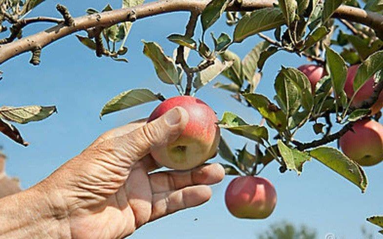 Why Organic Seeds?