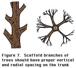Follow Proper Pruning Techniques