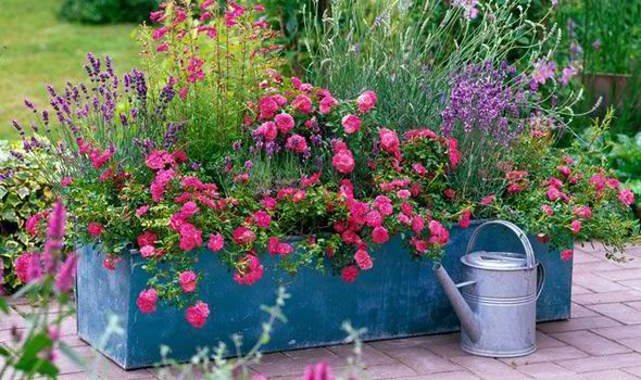 PLANTING YOUR POTS AND CONTAINERS