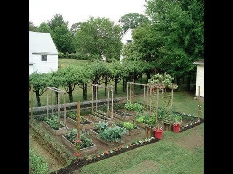GROWING ORGANIC VEGETABLES IN YOUR BACK YARD